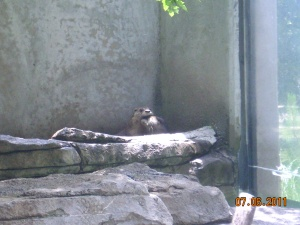 Zoo trip 7.6.11