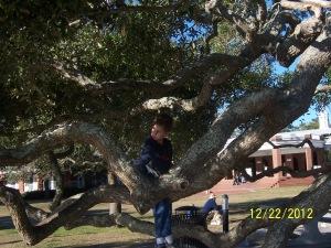 big tree 12.22