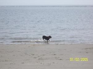 molly beach christmas 2012