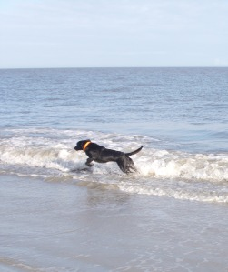 molly run in ocean
