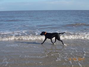 molly walk in water