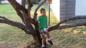 big in tree