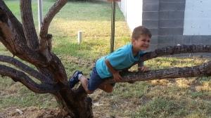 little in tree