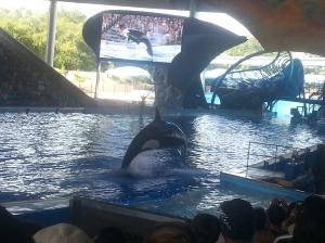 whale again