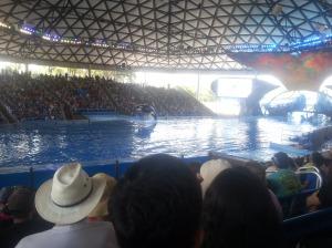 whale in air