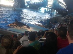 whale up again