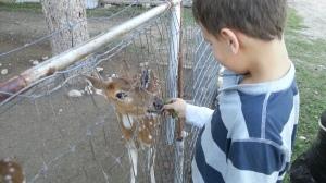 feeding the deer