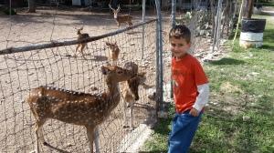 little with deer