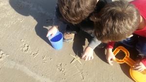 sea star and boys