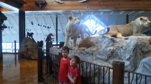 boys and lion